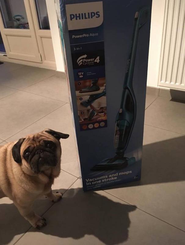 hond met doos stofzuiger Philips
