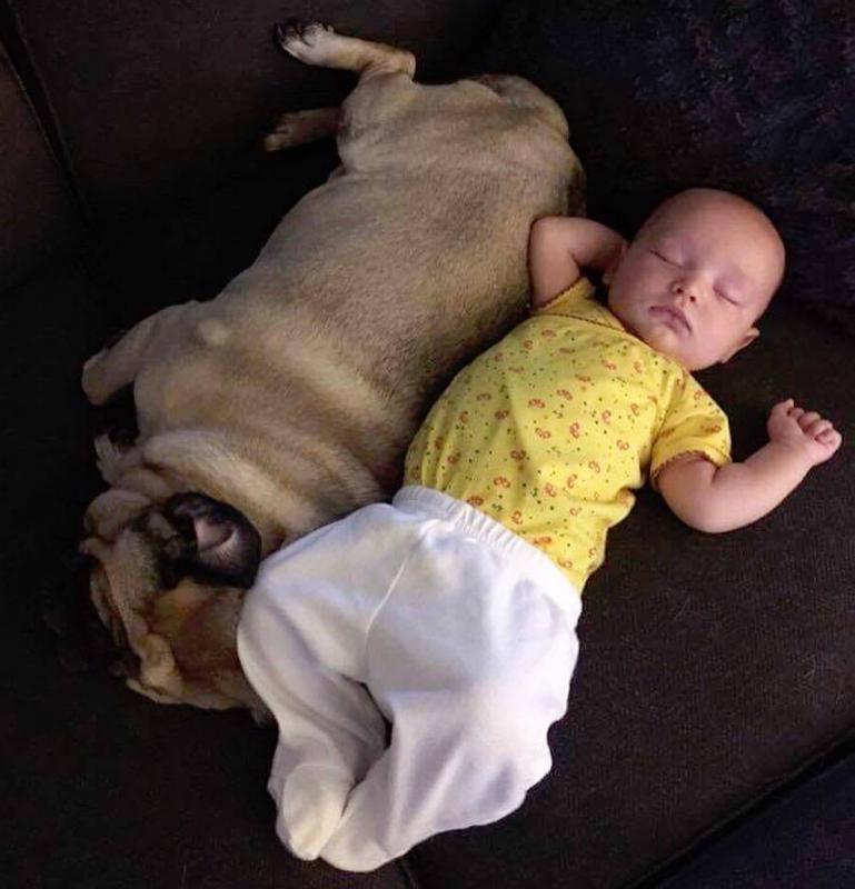 baby en hond in zetel