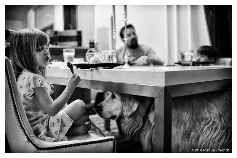 hond schooit eten bij meisje aan tafel