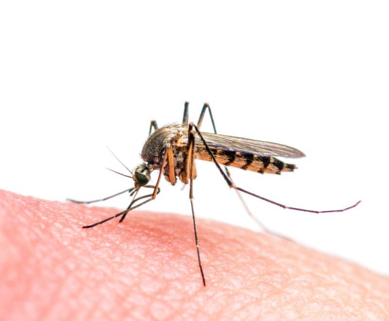 muggenbeet zikavirus